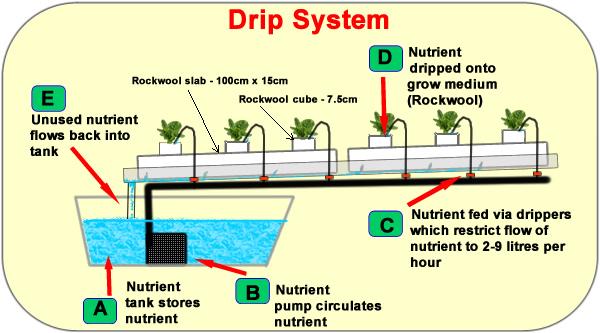 Hydroponic system - Rockwool dripper system