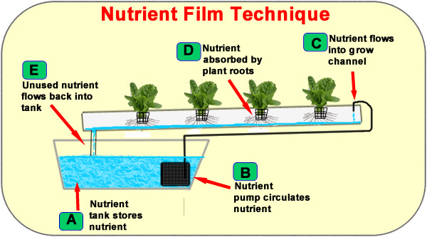 Nutrient Film Technique (NFT) - Hydroponic System